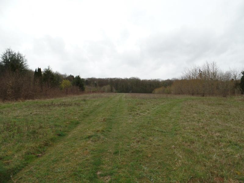 Forêt de Dourdan (91) Sam_1313