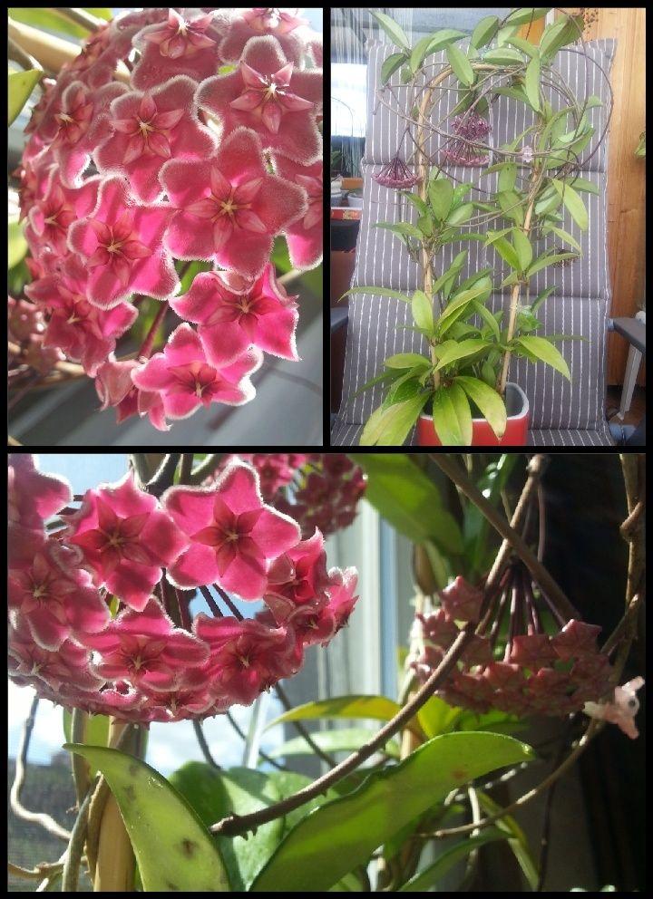 Blüten 2015 2015-010