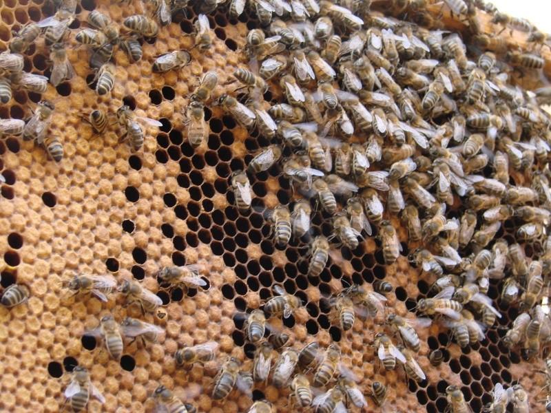 Essaim artificiel avec plusieurs ruches - Page 2 Dsc01718