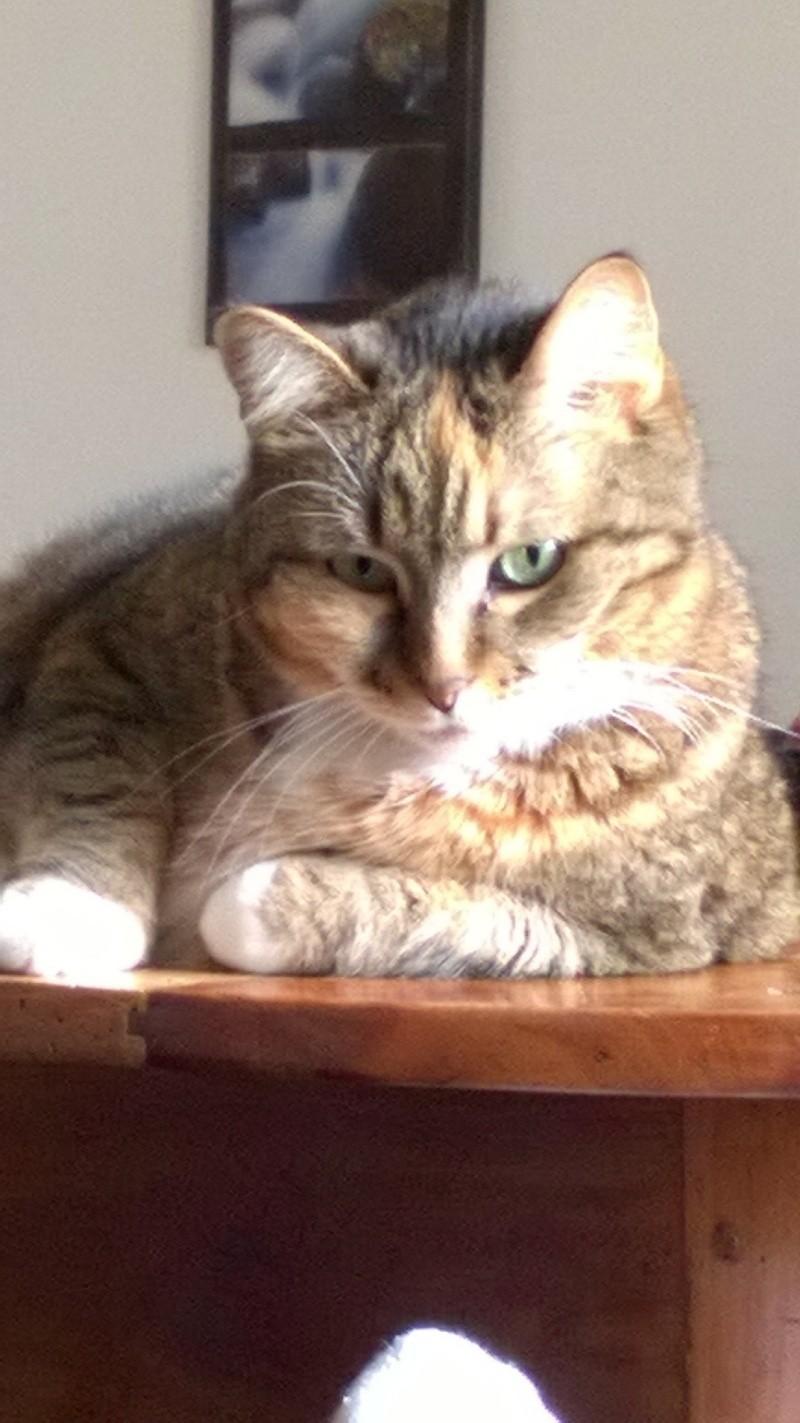 Marlone, femelle type européen tricolore, née en 2004 (frais d'adoption libres) Image27