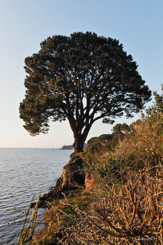 Saint Philibert - plage de Kernevest Stphil19