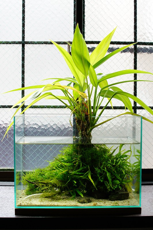 identifier une plante  Tumblr10