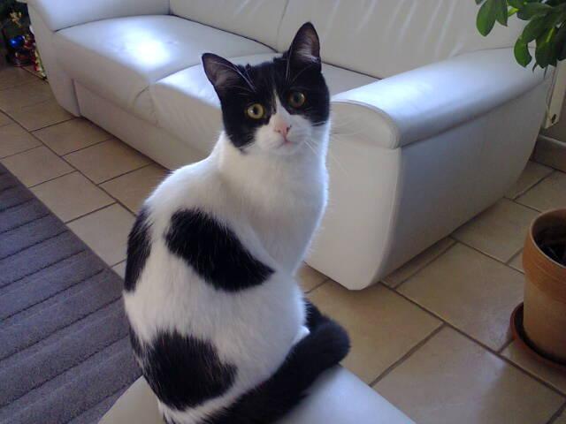 Janice,chaton femelle née le 20 mars adoptée - Page 2 V_c46711