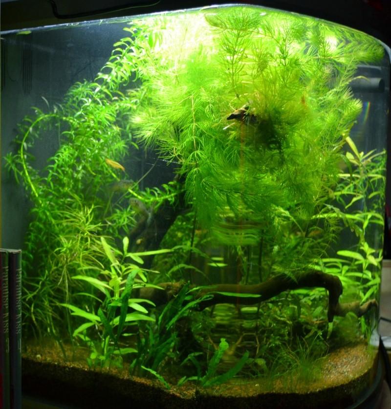60 litres notre 4ème bac à la maison Bacdav11