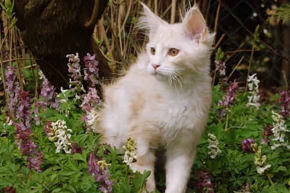 Three more kitties!!! Image17