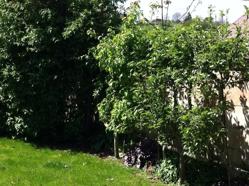 Jardinage en tout genre - Page 5 2012_011