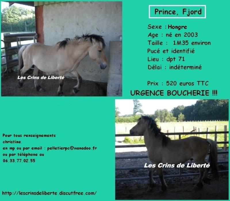 71 - Prince - fjord - sauvée par Marie(Juin 2015) - Page 5 10885111