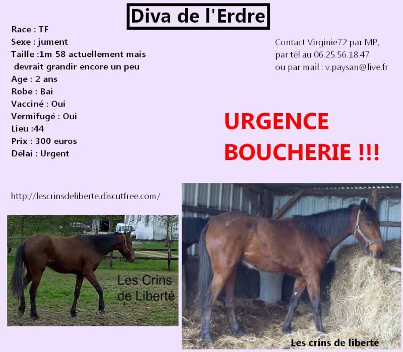Dpt 44, Diva de l'Erdre et Luina (Juin 2015) Les_cr33