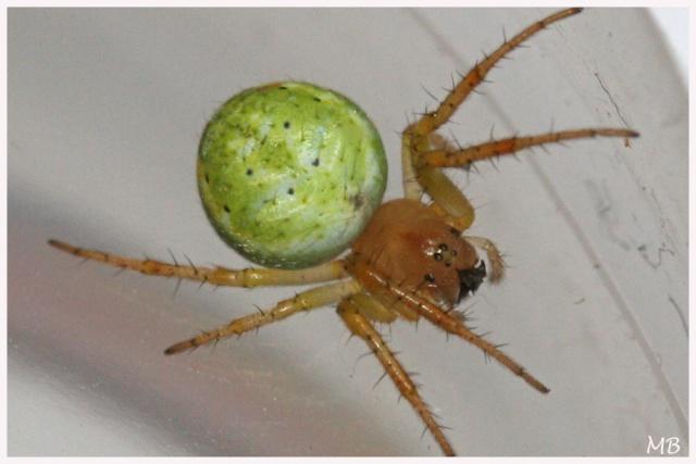 L'araignée à Gilou  Img_5910