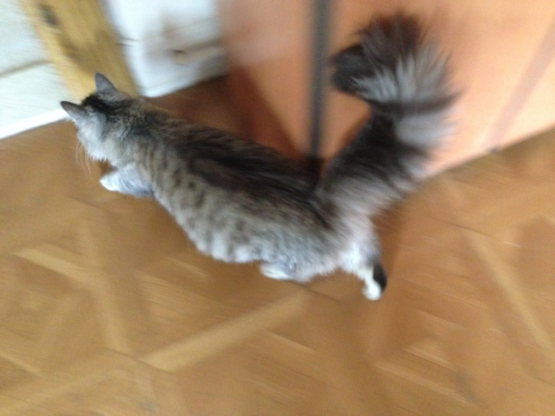 j ' adore mon chat !!! - Page 5 Img_3412