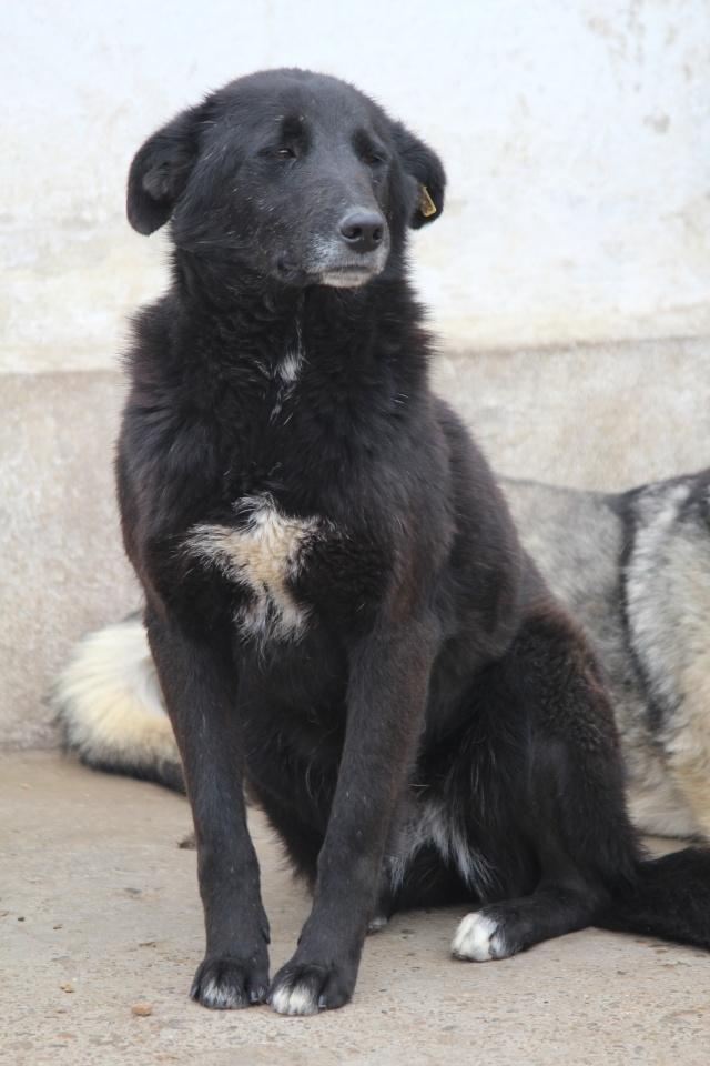 VIOLETTE - Femelle croisée, taille moyenne née env décembre 2010 (PASCANI) - en FA chez kimcham (dpt49) - doit changer de famille ! - Page 2 Img_4227