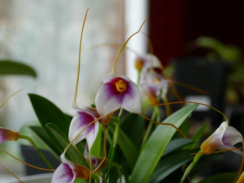 Mes premières orchidées P1000613