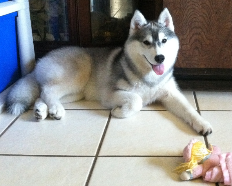 Show me pictures of your puppies at 6 months! 26011