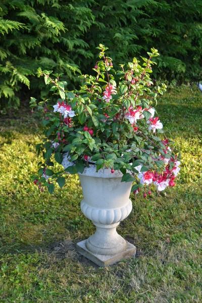 Jardinage.... Dsc_3217