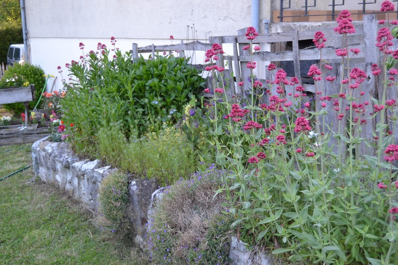 Jardinage.... Dsc_3219