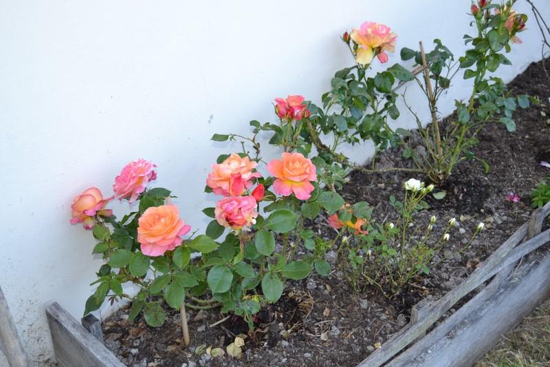 Jardinage.... Dsc_3220