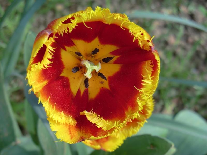 Quelques fleurs .... Cimg1015