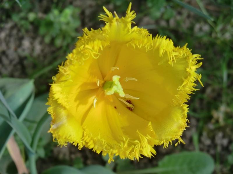 Quelques fleurs .... Cimg1017