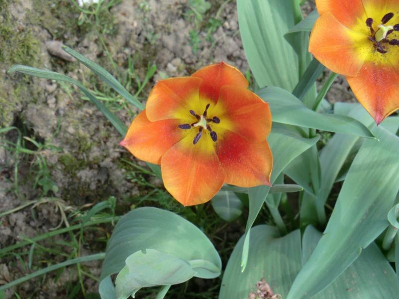 Quelques fleurs .... Cimg1018