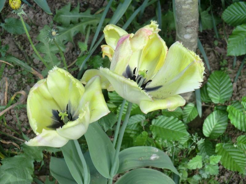 Quelques fleurs .... Cimg1019