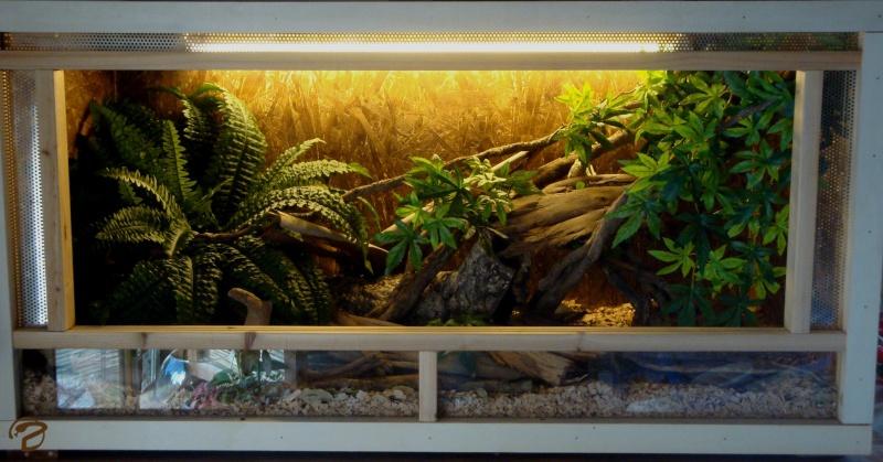 Jaïka dans son terrarium 0101210