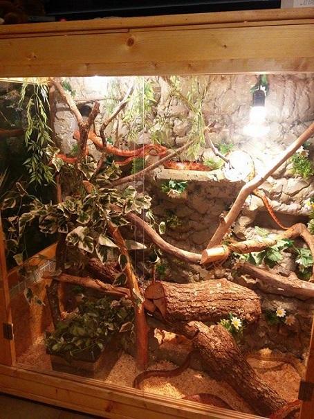 Jaïka dans son terrarium 10438412