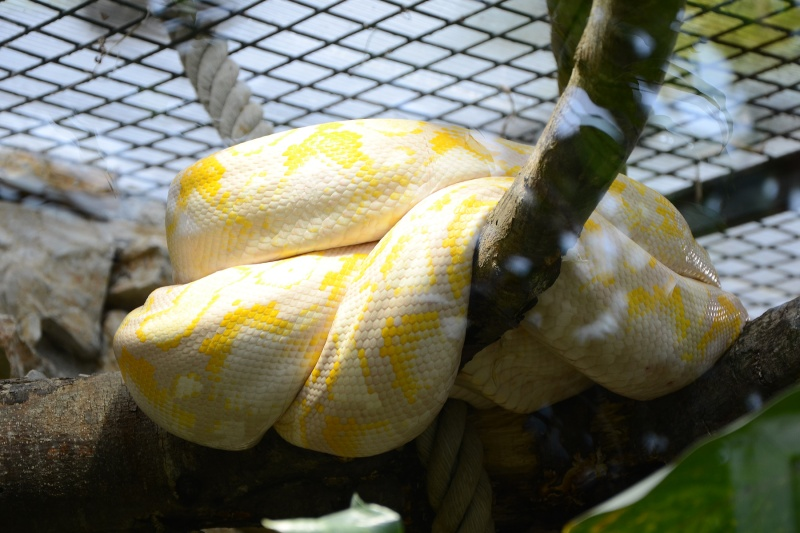 [Recueil de photos] De jolies photos d'ophidiens - Page 4 Zoo-de10