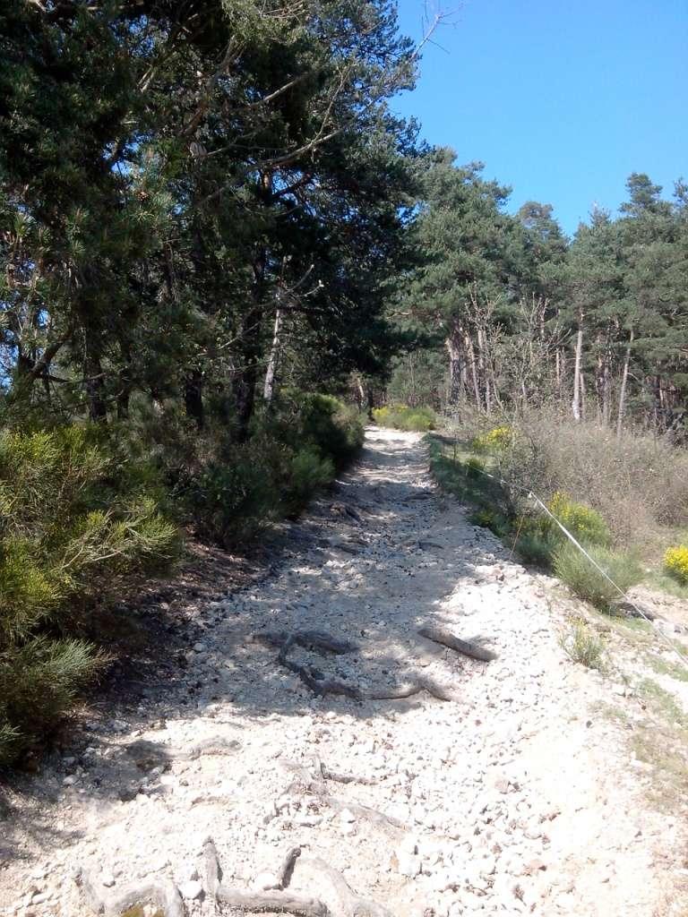 Les chemins du Pilat avec le soleil en prime Img_2013