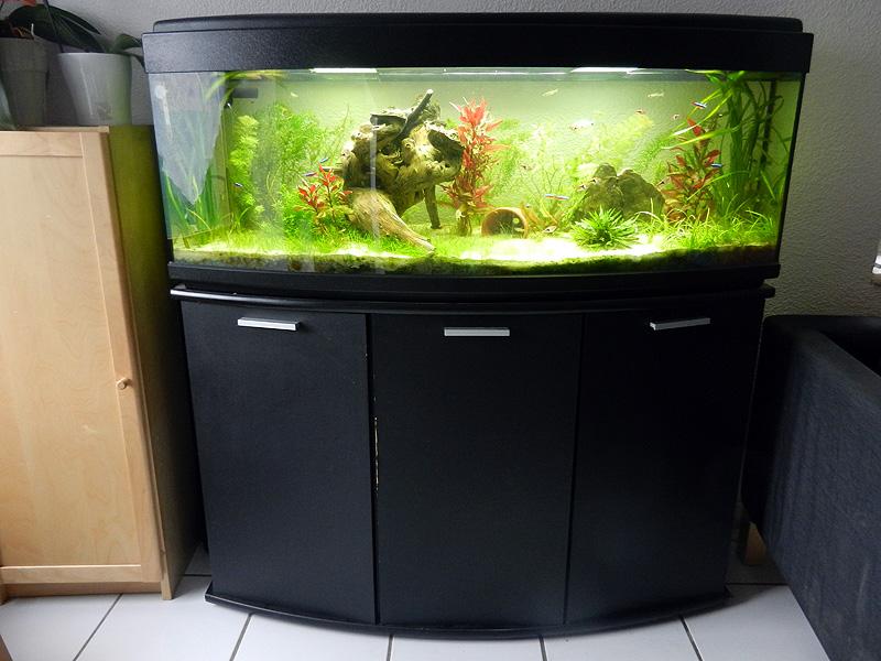 Mon aquarium de A à Z... C'est fini :( - Page 7 Dscn3610