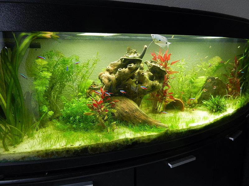 Mon aquarium de A à Z... C'est fini :( - Page 7 Dscn3611