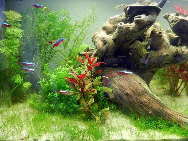 Mon aquarium de A à Z... C'est fini :( - Page 7 Dscn3612