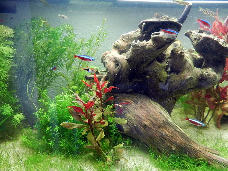 Mon aquarium de A à Z... C'est fini :( - Page 7 Dscn3613