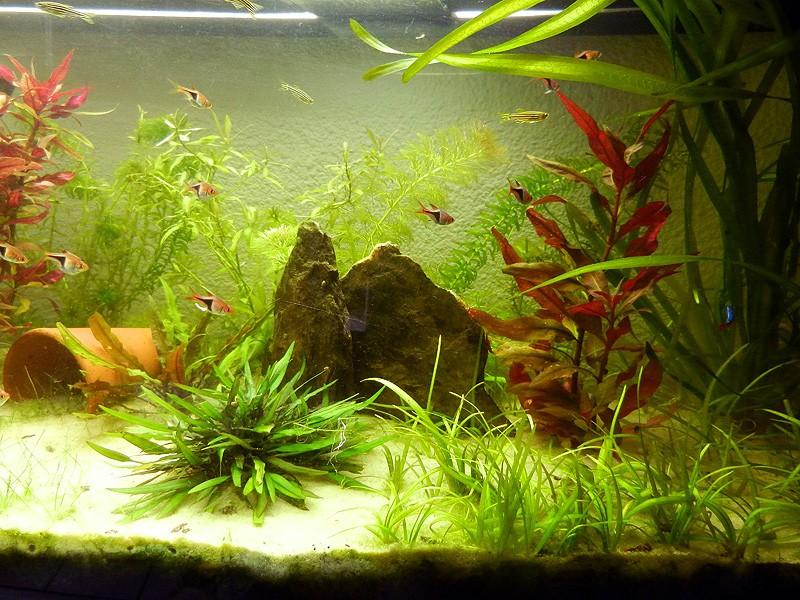 Mon aquarium de A à Z... C'est fini :( - Page 7 Dscn3614