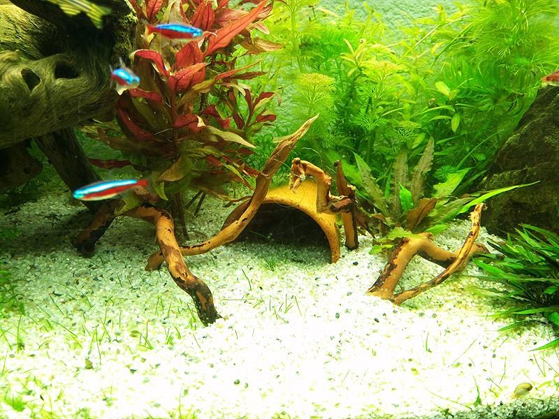 Mon aquarium de A à Z... C'est fini :( - Page 9 Img_2014