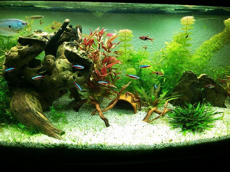 Mon aquarium de A à Z... C'est fini :( - Page 9 Img_2015