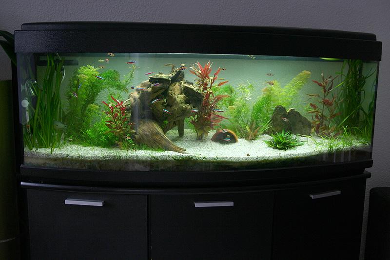 Mon aquarium de A à Z... C'est fini :( - Page 8 Img_8610