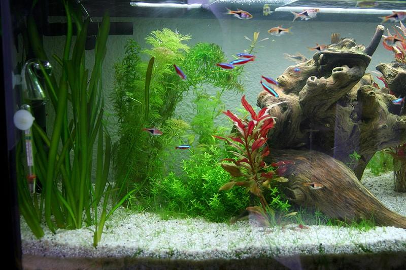 Mon aquarium de A à Z... C'est fini :( - Page 8 Img_8611
