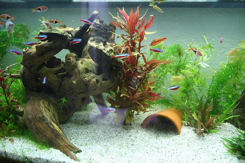 Mon aquarium de A à Z... C'est fini :( - Page 8 Img_8612