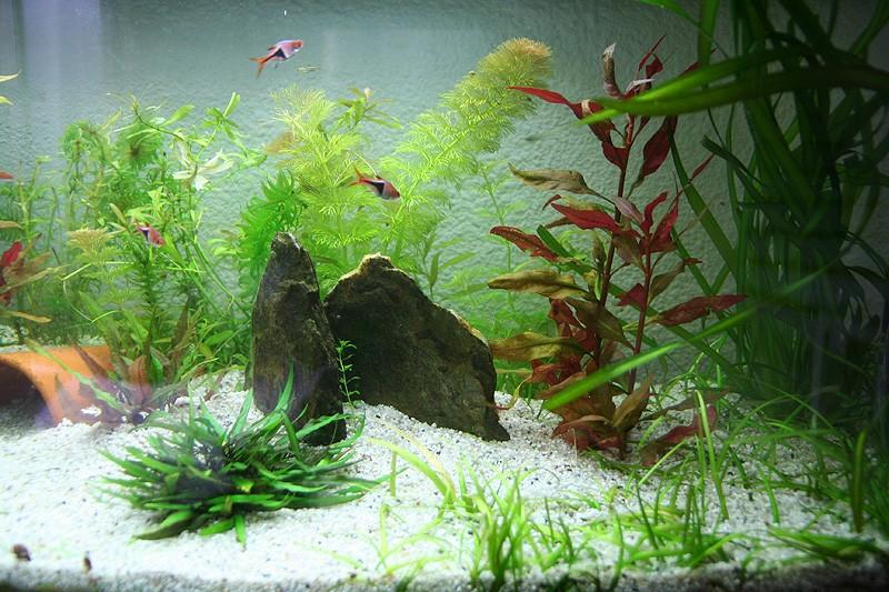 Mon aquarium de A à Z... C'est fini :( - Page 8 Img_8613