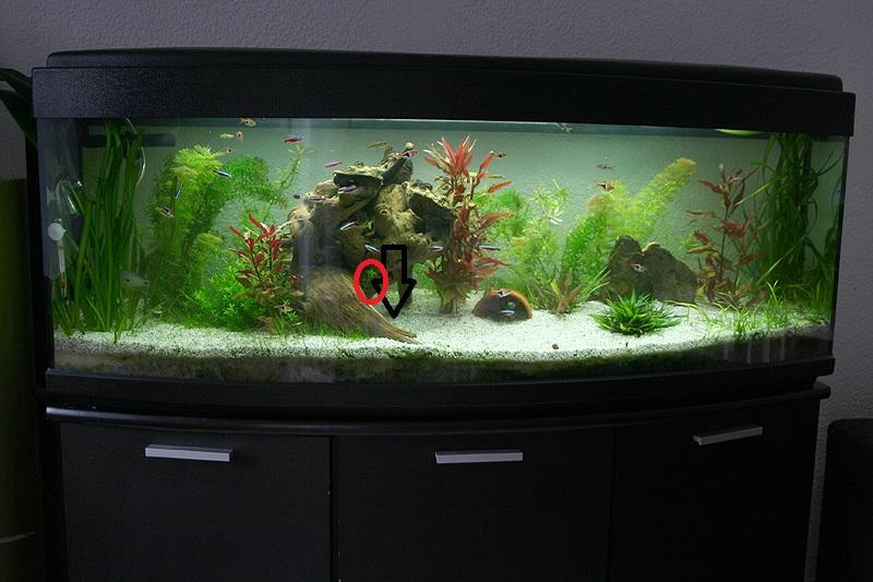 Mon aquarium de A à Z... C'est fini :( - Page 8 Img_8615