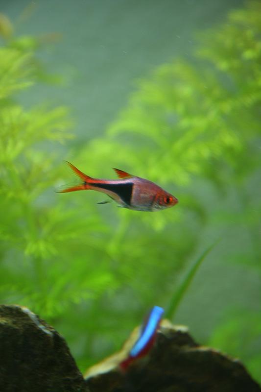 Mon aquarium de A à Z... C'est fini :( - Page 8 Img_8710