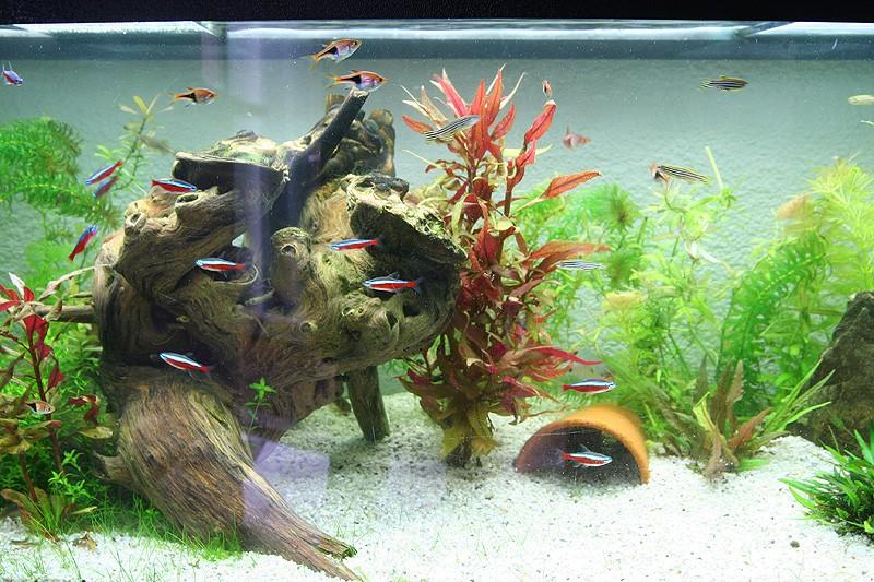 Mon aquarium de A à Z... C'est fini :( - Page 8 Img_8711