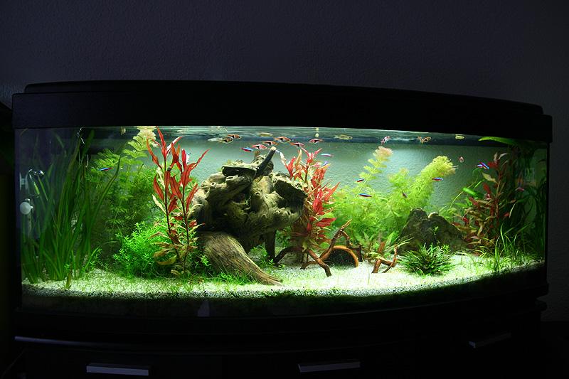 Mon aquarium de A à Z... C'est fini :( - Page 9 Img_8718