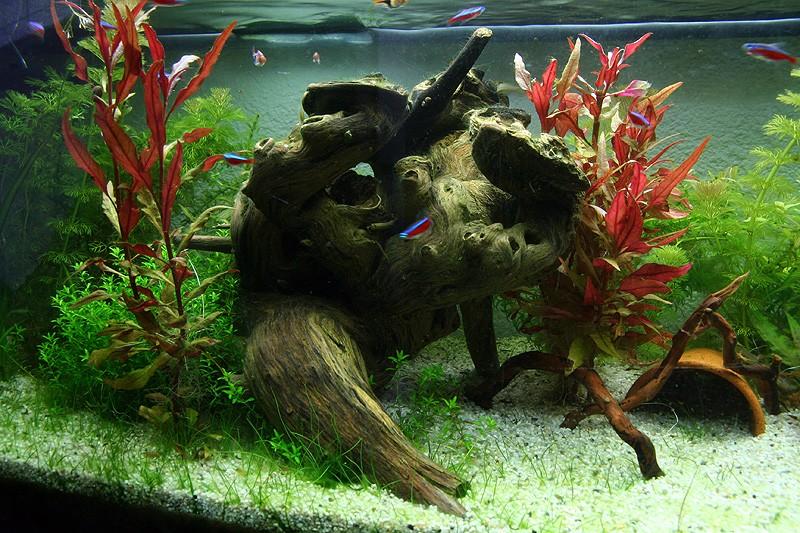Mon aquarium de A à Z... C'est fini :( - Page 9 Img_8720