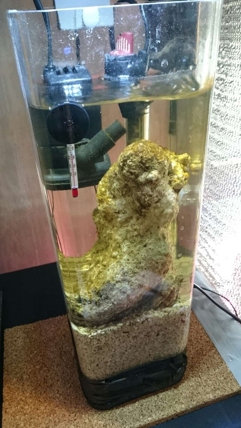 Pico Jaubert dans un vase (6 l) Img_2028