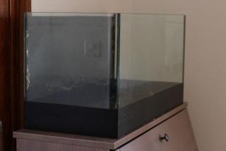 Mon premier aquarium Img_2011