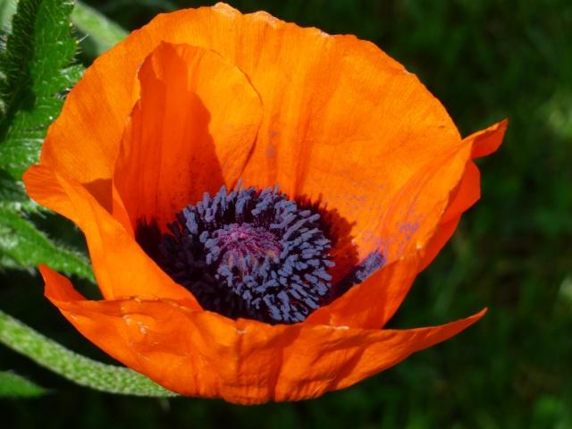 le joli mois de mai des fous jardiniers - Page 4 P1000710