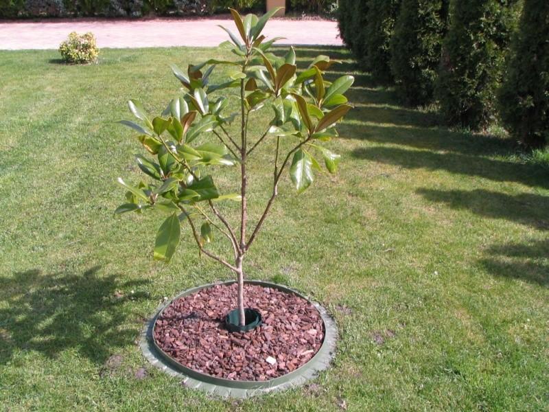 Magnolias - Page 15 Img_3212