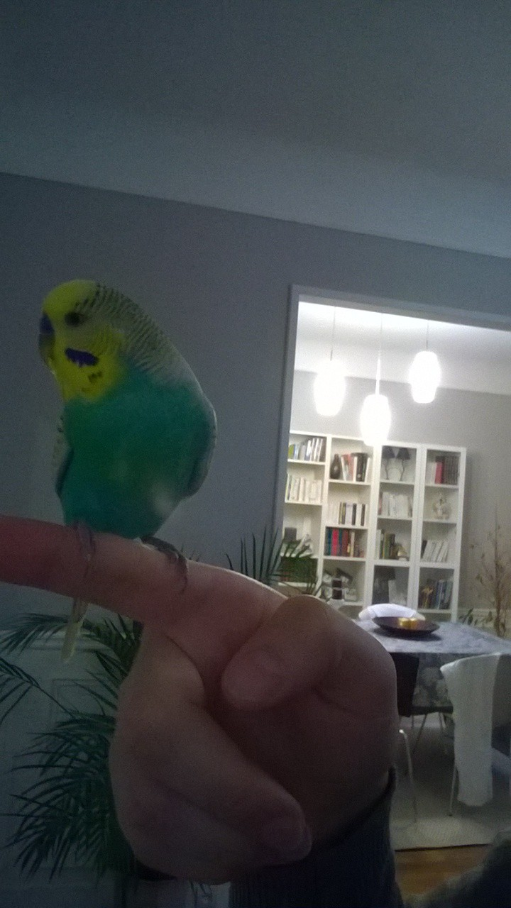 Ma nouvelle boule de plume. Nokia_12