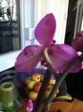 Tâches noires sur fleurs de Phalaenopsis Img_1011